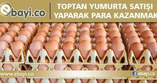 toptan yumurta işi
